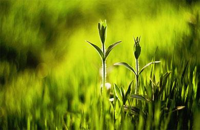 Technologie Bezodpadowe i Zagospodarowanie Odpadów w przemyśle i rolnictwie